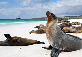 The Galapagos Islands: The isles that changed the world