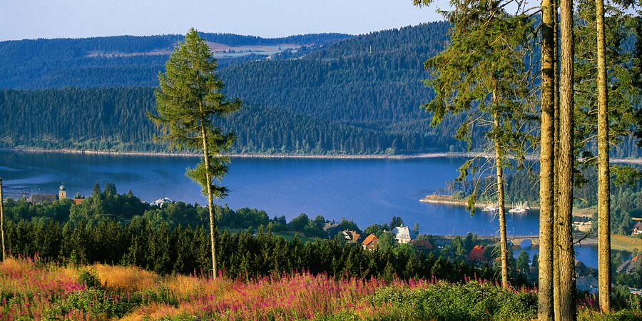 The Beautiful Black Forest