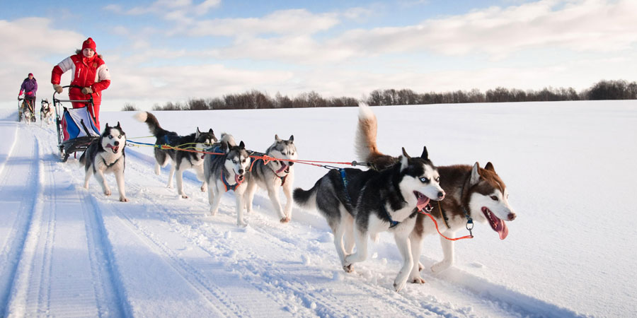 Scandinavian Huskies