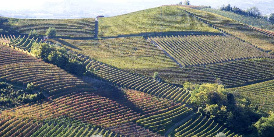 Langhe Wine Region
