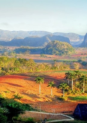 Vinales Valley Plantation