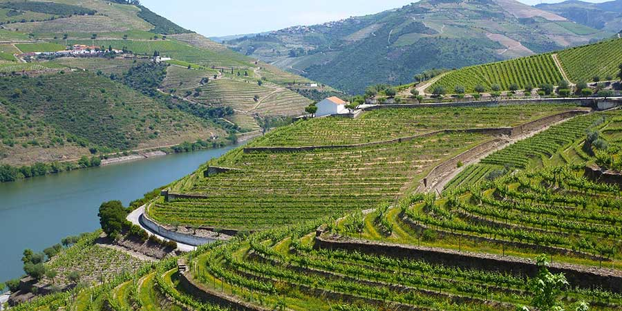 Douro Valley, Vineyards