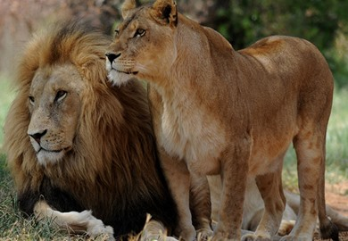 African Rail Tours - Escorted Tours & Trips | Great Rail Journeys