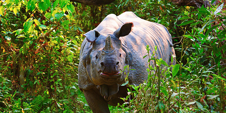 Wildlife in Kaziranga National Park