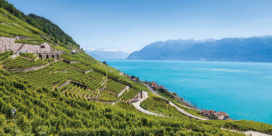 Lavaux Region Vineyard